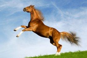 Лошадь оштрафовали за превышение скорости