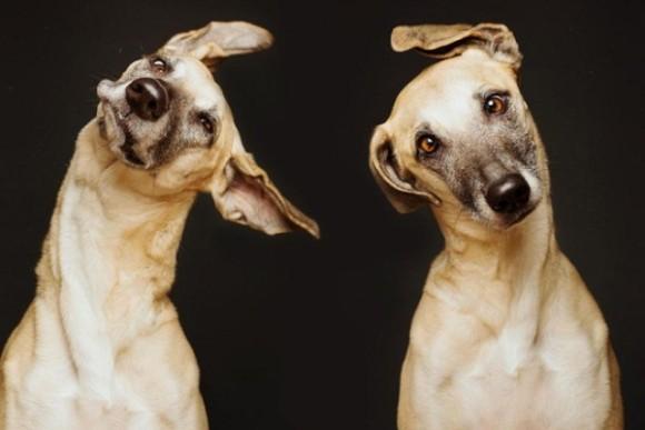 Удивительная фотосессия для собак