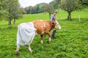 Каждой корове – по подгузнику