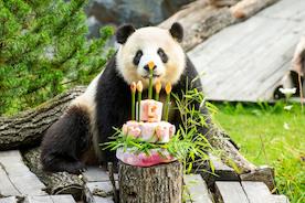 С Днём Рождения, Менг Менг!