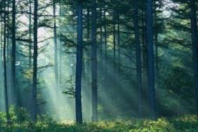 Немецкие деревья растут быстрее, чем раньше
