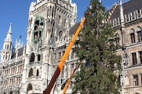 Ура! В Мюнхене поставили рождественскую ёлку!