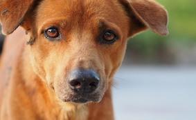 В Берлине участились случаи отравления собак