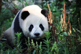 Что едят панды? Первый завтрак в Берлине
