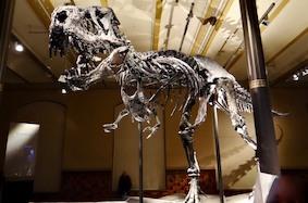 Тираннозавр Тристан Отто покидает Берлин