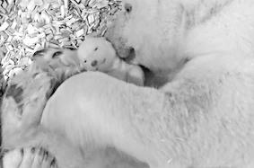 Свидание вслепую закончилось — белый медвежонок открыл глаза
