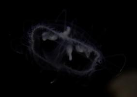 Нашествие мелкоразмерных медуз в водоемах Германии
