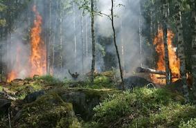 Высок риск лесных пожаров
