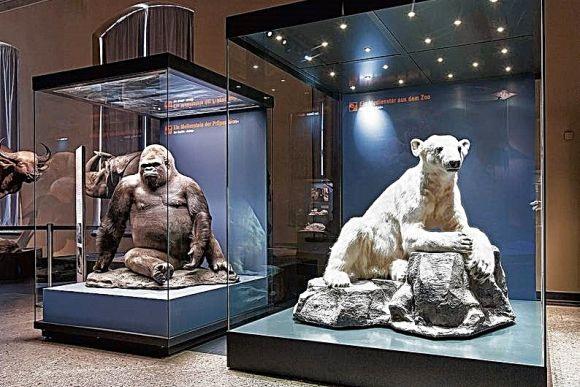 Медвежонок Кнут снова «звезда» Берлина