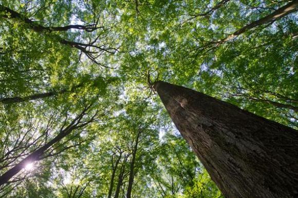 Старые буковые леса Германии