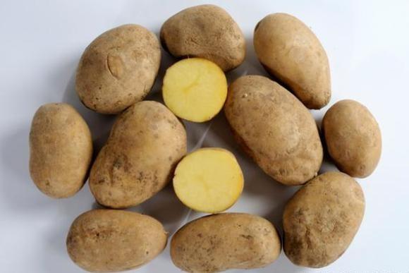 Картошка-2015 в Германии