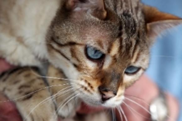 Случайно замурованный кот был спасен через 27 дней