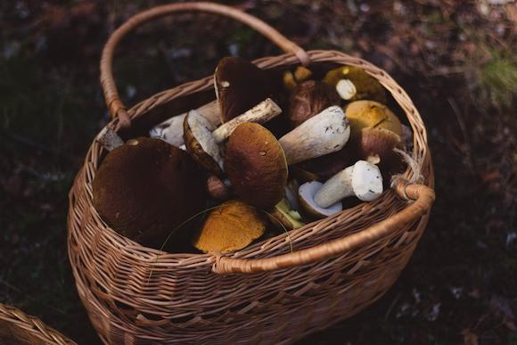 Тихая охота: грибной сезон открыт