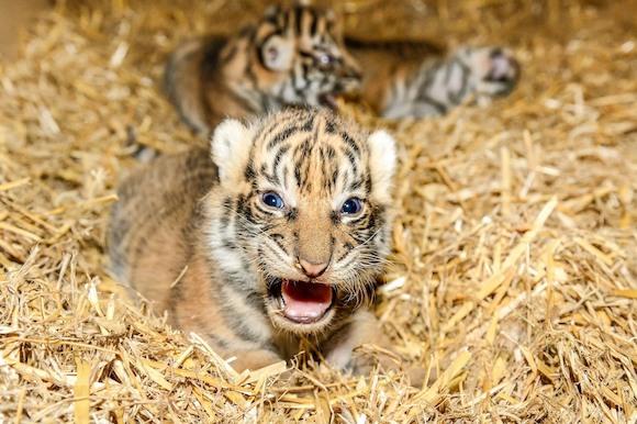 В Tierpark Berlin большой праздник