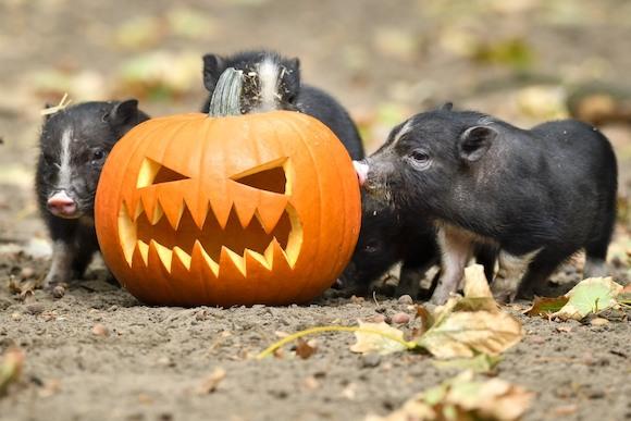 Встречаем Хэллоуин в Берлинском зоопарке