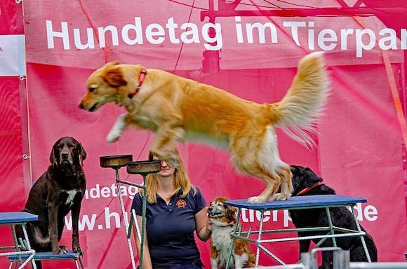 «День собаки» в Берлине