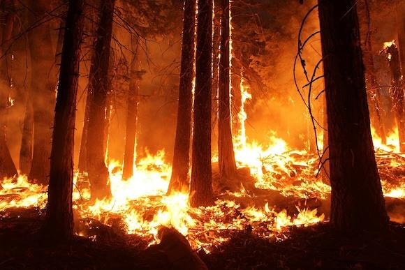 Опасность возгорания лесов возрастает