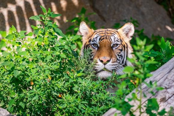 Благородное сотрудничество в защиту животных